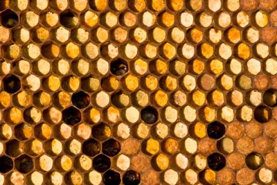 Bijenbrood in de raat