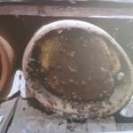 bijen houden Malta
