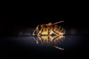 bijen retreat